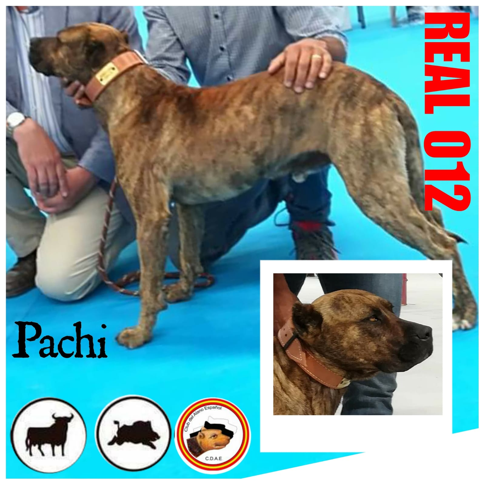 REAL 012_PACHI