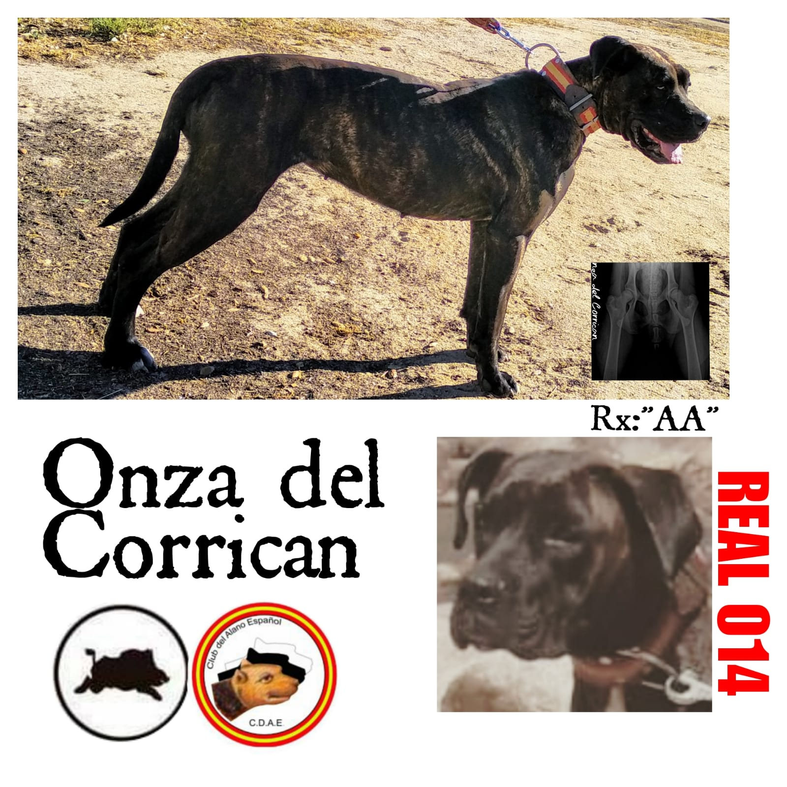 REAL 014_ONZA